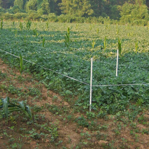 Solving the Three Big Challenges of Summer Food Plots