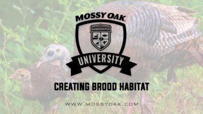 Creating Brood Habitat