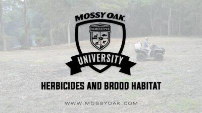 Using Herbicides To Maintain Brood Habitat