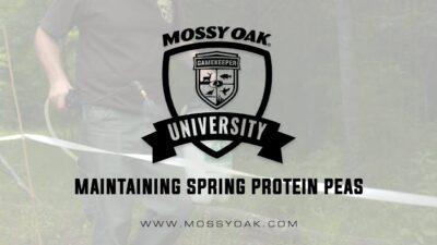 Maintaining Spring Protein Peas