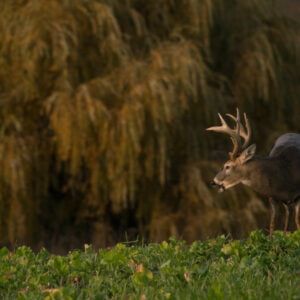 Creating Ideal Whitetail Habitat with The Lindsey's | The GameKeepers of Mossy Oak (2021 Season)