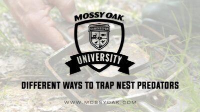 Different Ways To Trap Nest Predators