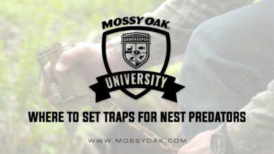 Where To Set Traps For Nest Predators