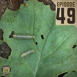 EP:49 | Armyworm Alert!