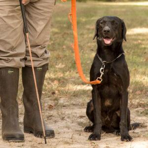 Gundog Training: The Heeling Stick