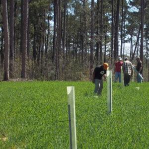 Tree Plots Produce Mast and Reduce Conversion