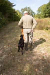 gundog-training-heeling
