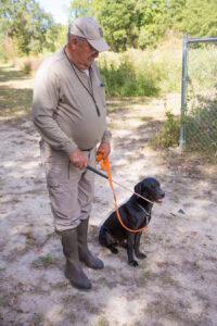 gundog-training-heeling-stick