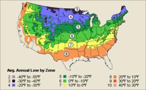 american plum growing zone 3-8